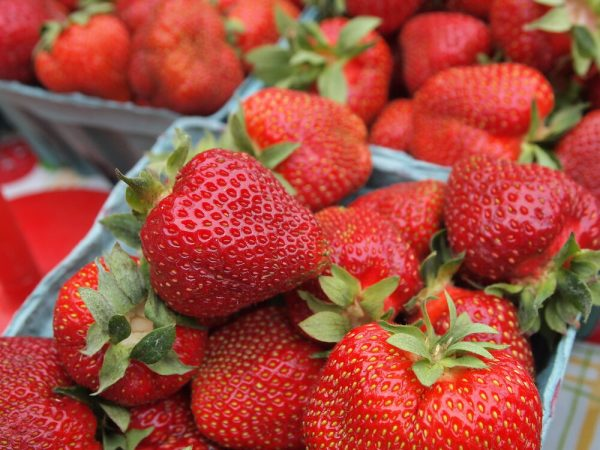 Friske Orchards Farm Market strawberries near charlevoix michigan