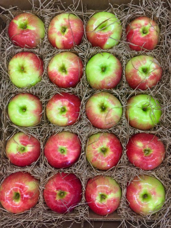 apples-zestar