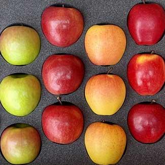 Fresh Apple Gift Boxes